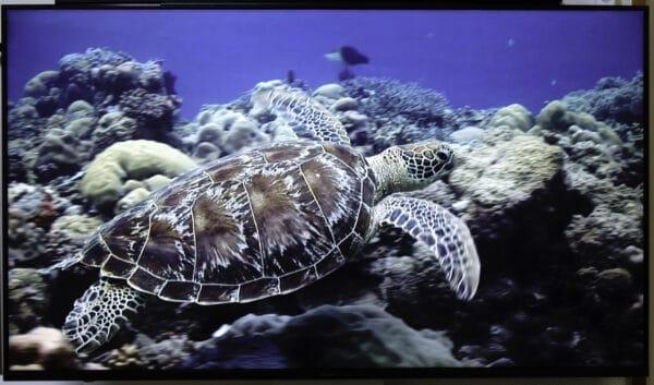4K動画のうち、海でカメが泳ぐシーンで甲羅の見え方を確認しました。